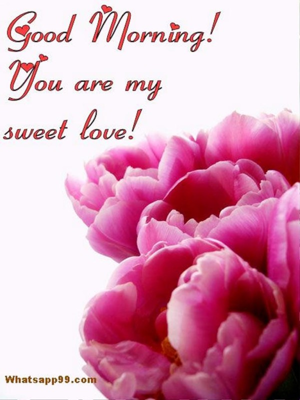 You Are My Sweet Love-wg01394