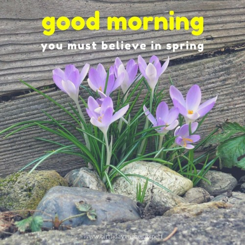 You Must Believe In Spring-wg01794