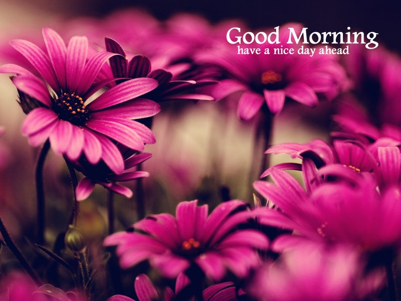Good Morning Wishes With Flowers Pictures Images Page 3