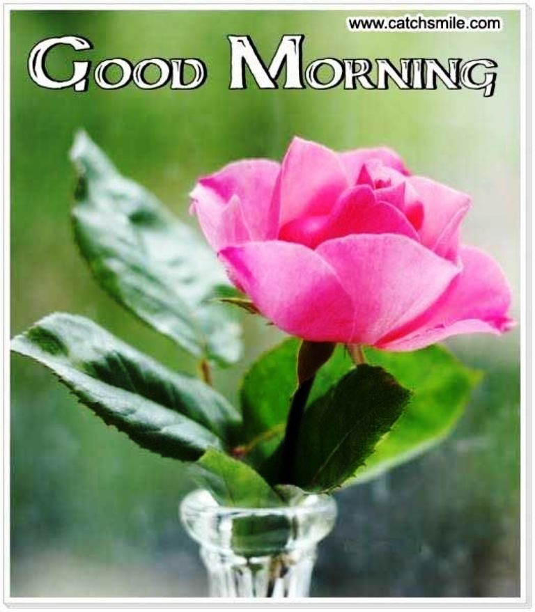 Good Morning Wishes With Flowers - 81.0KB