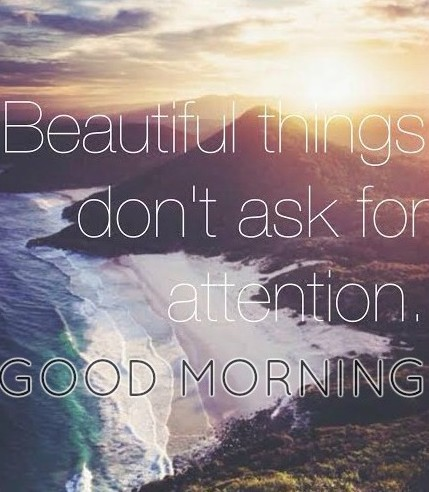 Beautiful Things Do Not Ask For Attention-wg16046
