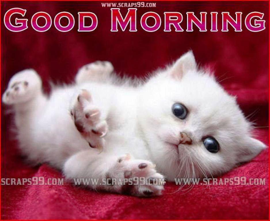 Good Morning Gif Cats