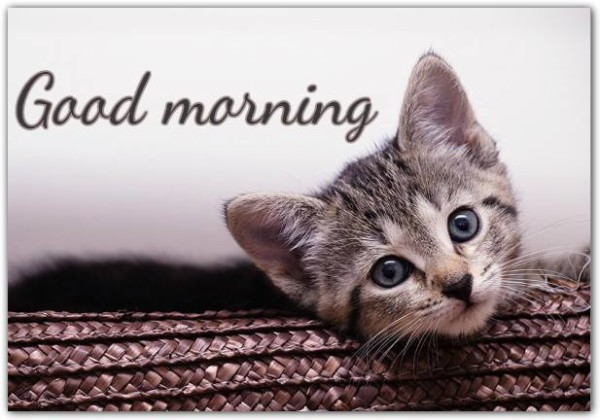 Cute Cat - Good Morning-wg16070