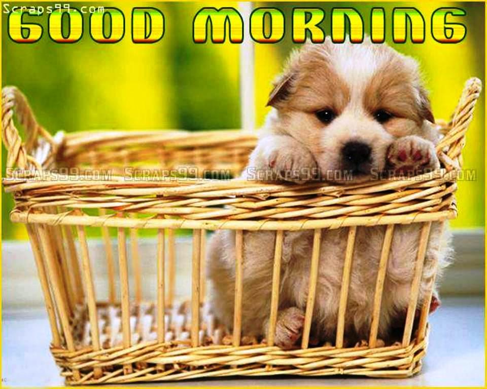 Cute Dog Good Morning
