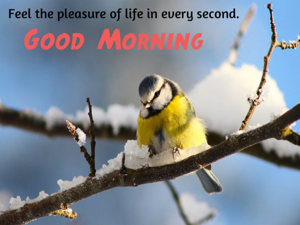 Feel the Pleasure Of Life - Good Morning-wg16104
