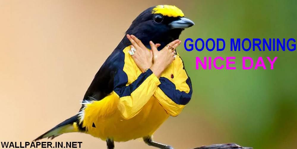 funny good morning pics free download
