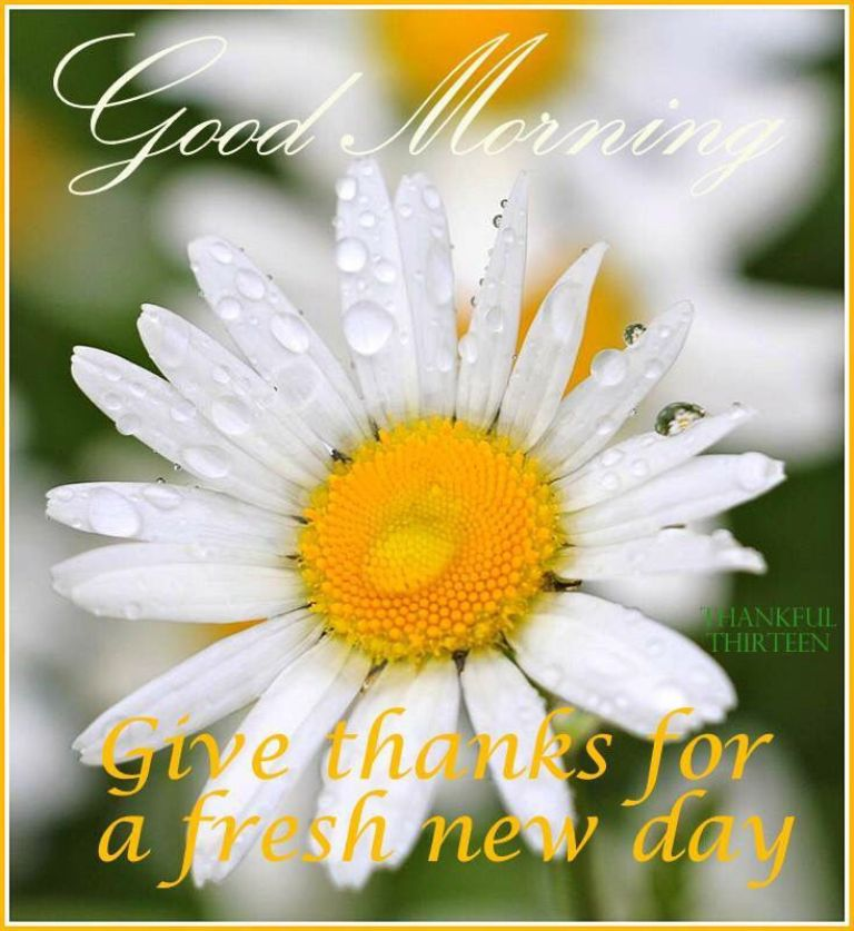 Good Morning Wishes With Flowers Pictures Images Page 25