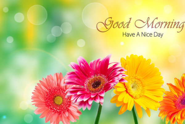 God Morning - Bright Flowers-wg16130