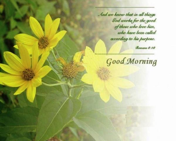 God Works For The Good - Good Morning-wg16137