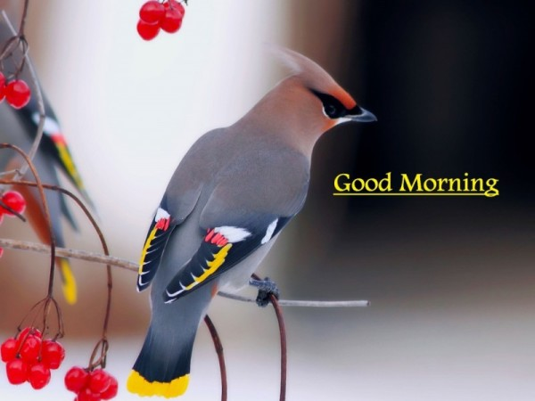 Good Morning - Beautiful Bird Image-wg16141