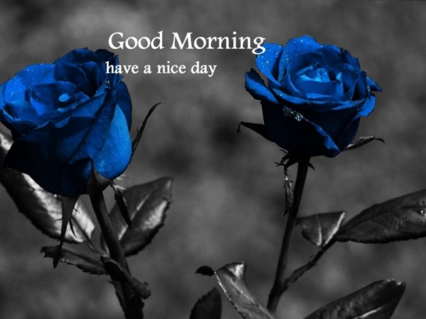 Good Morning – Beautiful Blue Roses