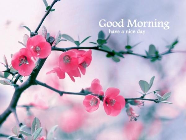 Good Morning - Beautiful Nature-wg16145