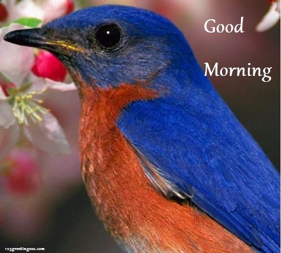 Good Morning - Bird-wg16151