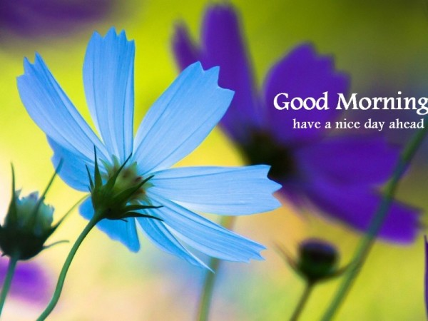 Good Morning - Blue Flower-wg16153