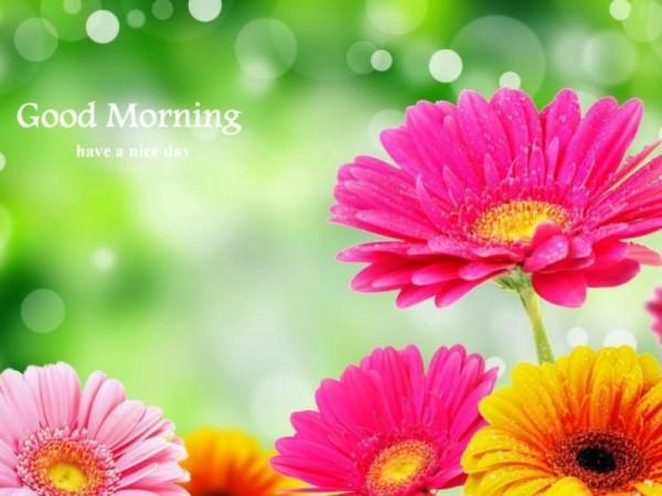 Good Morning - Bright Flowers-wg16154