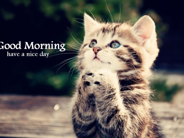 Good Morning – Cat Image