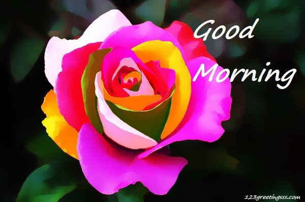 Good Morning - Colorful Rose-wg16165