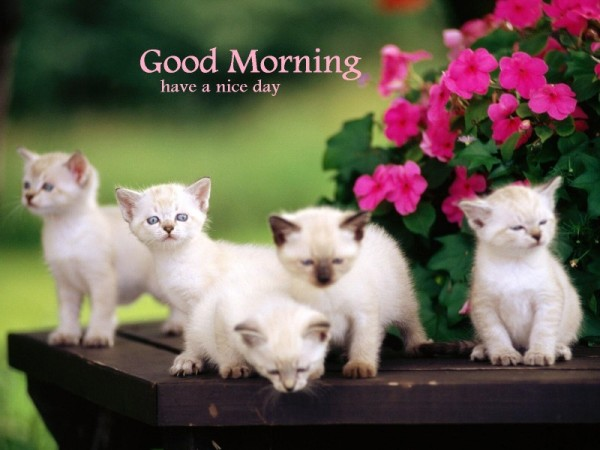 Good Morning – Cute Cats Image