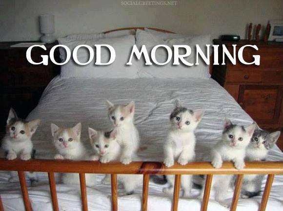 Good Morning - Cute Cats-wg16169