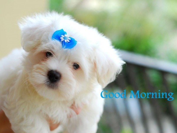 Good Morning - Cute Dog Image-wg16171