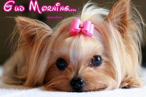 Good Morning - Cute Doggy-wg0180286