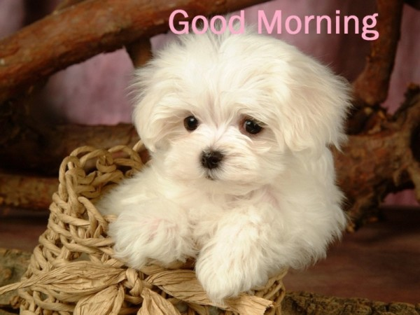 Good Morning - Cute Puppy-wg16172