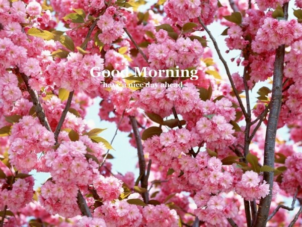 Good Morning – Flowers