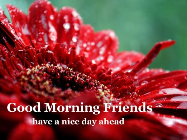 Good Morning Friends Have A Nice Day Ahead-wg16257