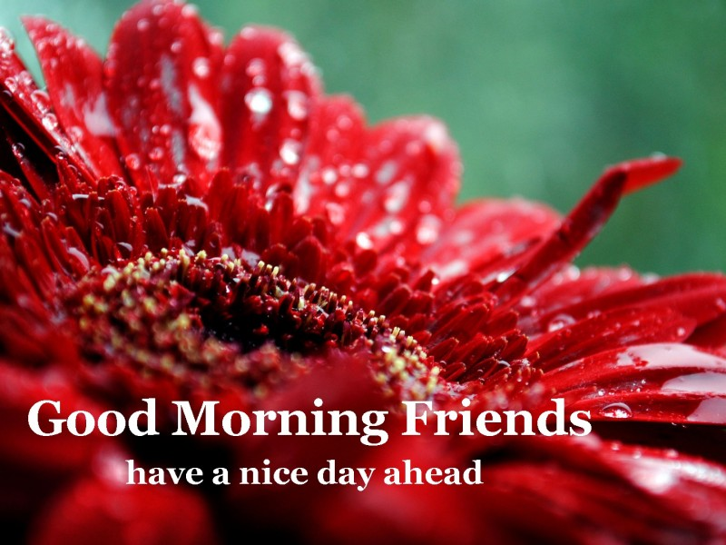 Good Morning Friends Have A Nice Day Ahead