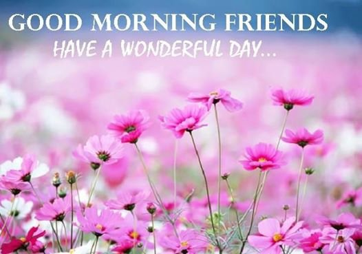 Good Morning Friends - Have A Wonderful Day-wg16255