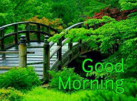 Good Morning - Green Nature-wg16178