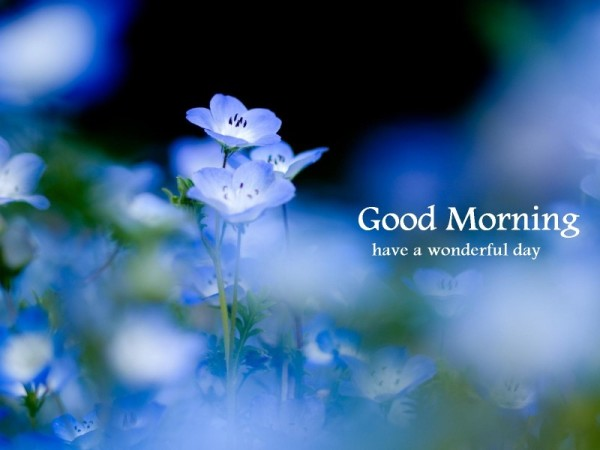 Good Morning Have A Wonderful Day !-wg16261