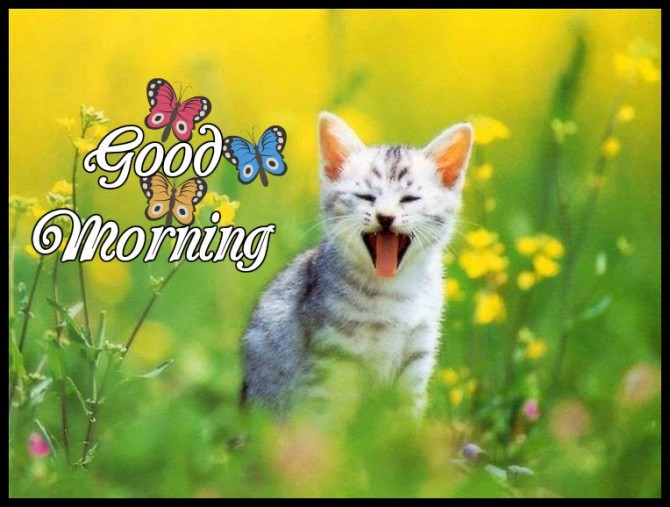Good Morning Quotes Cat : Good morning wishes with cat pictures images
