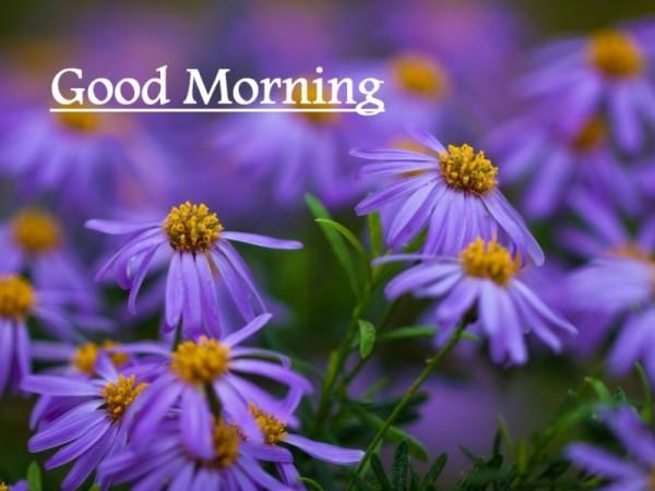 Good Morning – Little Purple Flowers