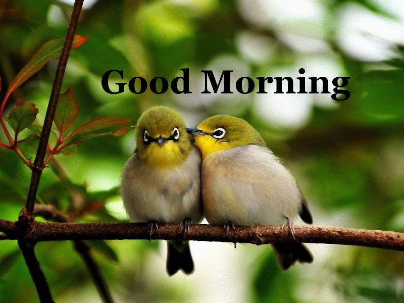 Good Morning Love Birds