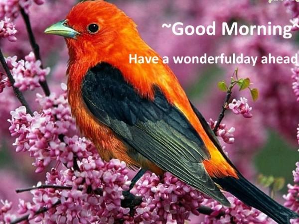 Good Morning - Orange Bird-wg16208