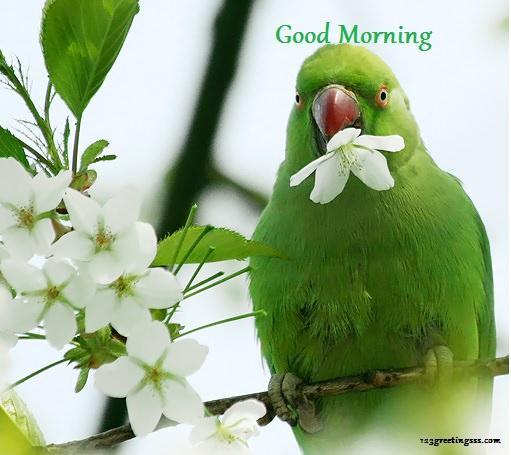 Good Morning - Parrot !-wg16209