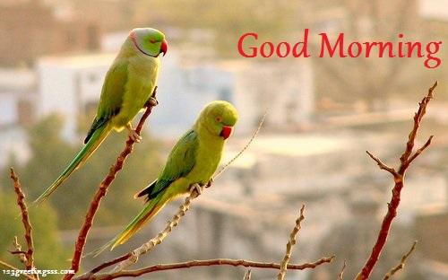 Good Morning - Parrots Image-wg16210