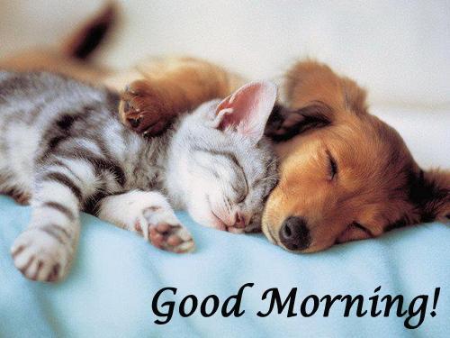 Good Morning - Sleeping Dog And Cat-wg16225
