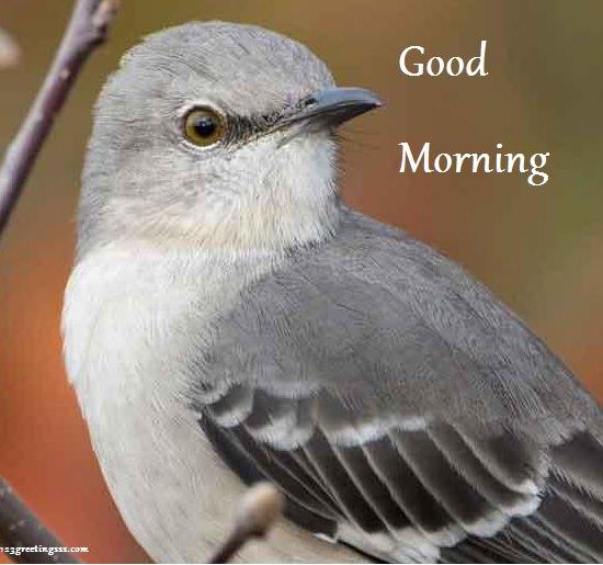 Good Morning - Sparrow Image-wg16227