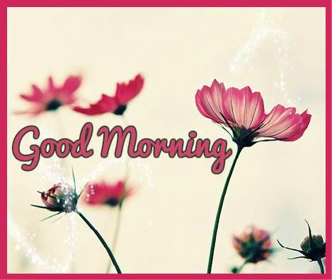 Good Morning - Water On Flowers-wg16234