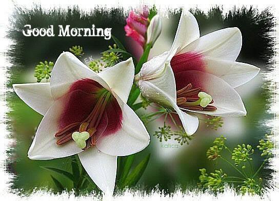 Good morning white flowers good morning white flowers wg0180623 mightylinksfo