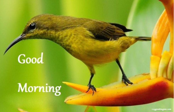 Good Morning With Bird-wg16286