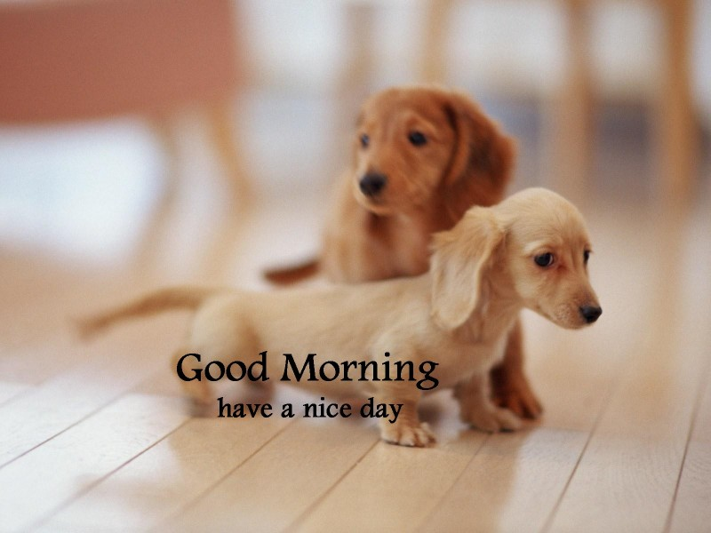 Good Morning With Dogs Image Wg16288
