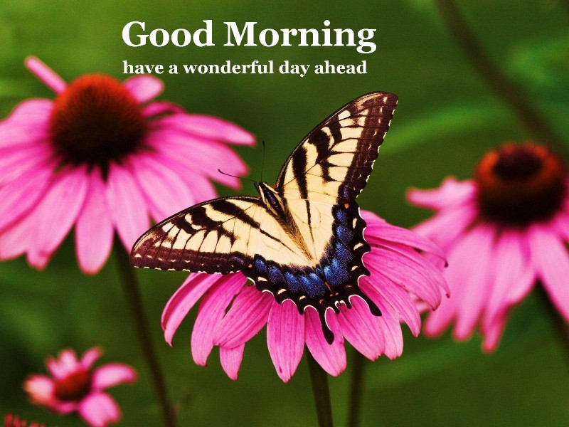 Good Morning Wishes Pictures Images Page 2