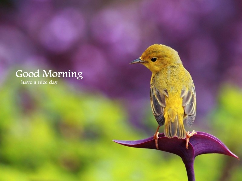 Love Birds Good Morning Wallpaper : Good Morning Wishes With Birds Pictures, Images - Page 2