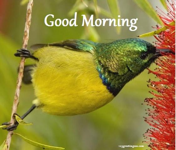 Good Morning - Yellow Bird-wg16237