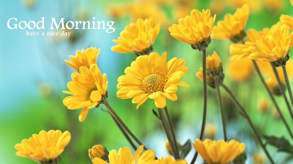 Good Morning Yellow Flowers Wg16238