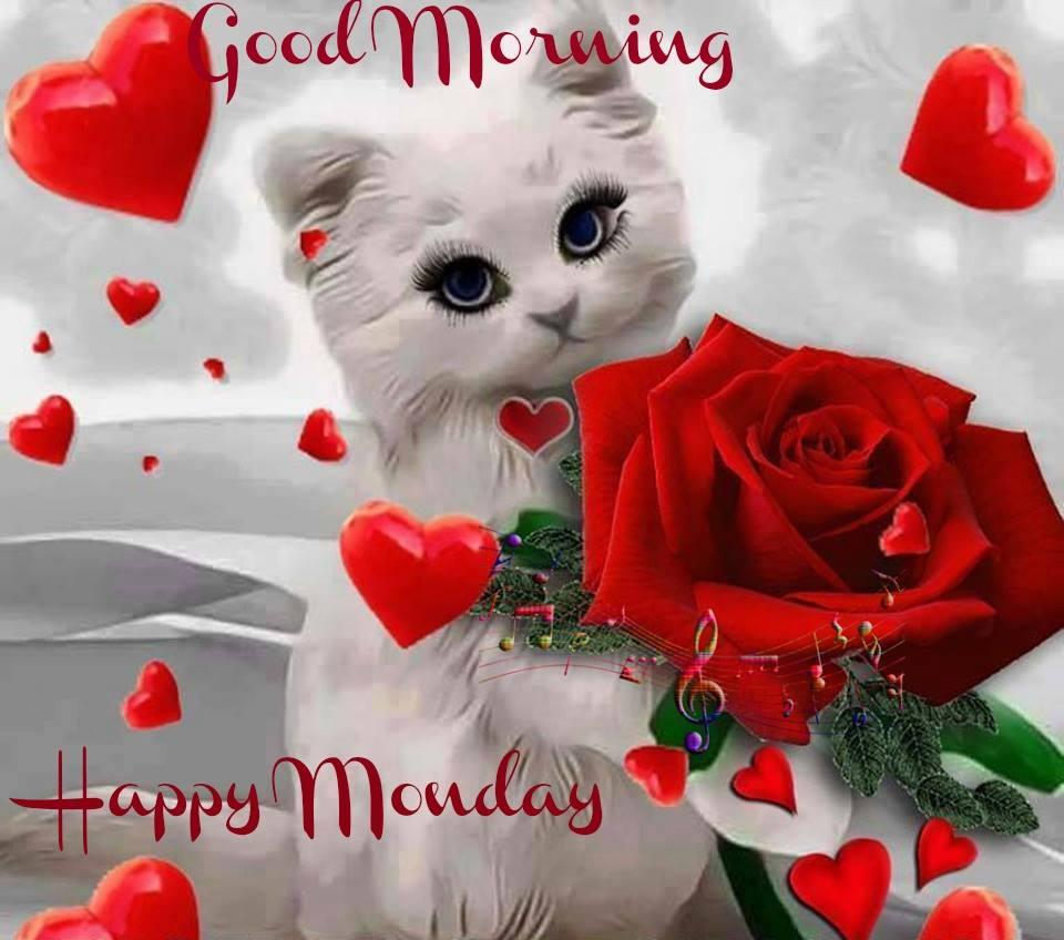 Good morning wishes with cat pictures images happy monday cat wg16308 voltagebd Gallery