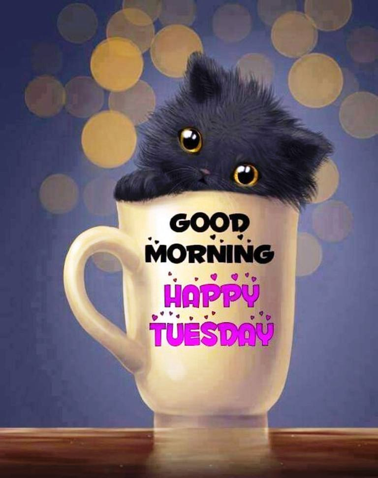 Good Morning Tuesday Images : Good morning wishes on tuesday pictures images page